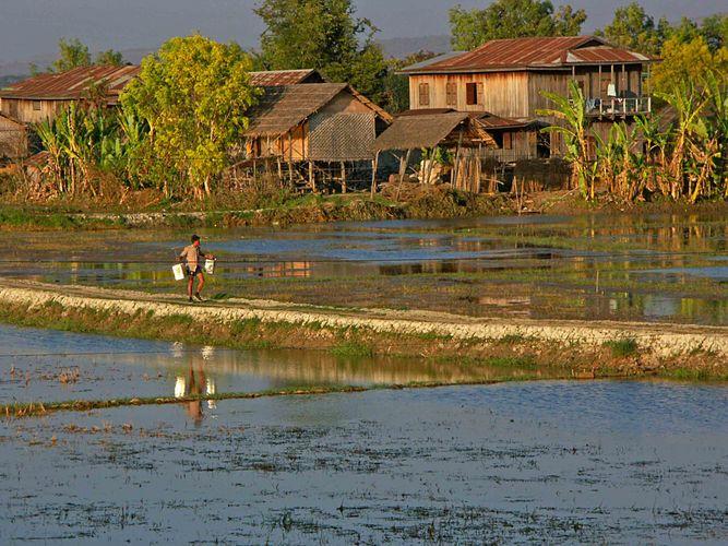Zwischen den Reisfeldern