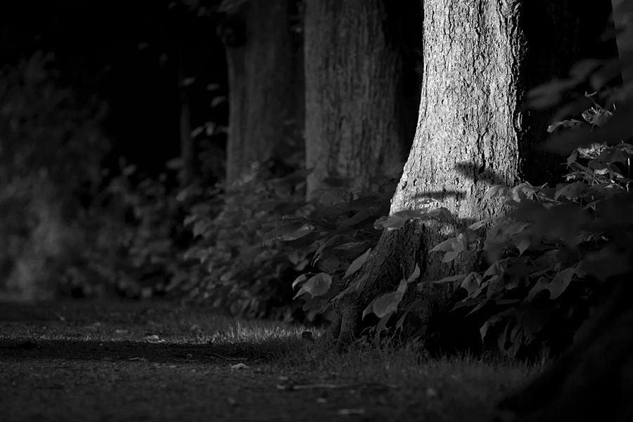 zwischen Dunkel und Licht