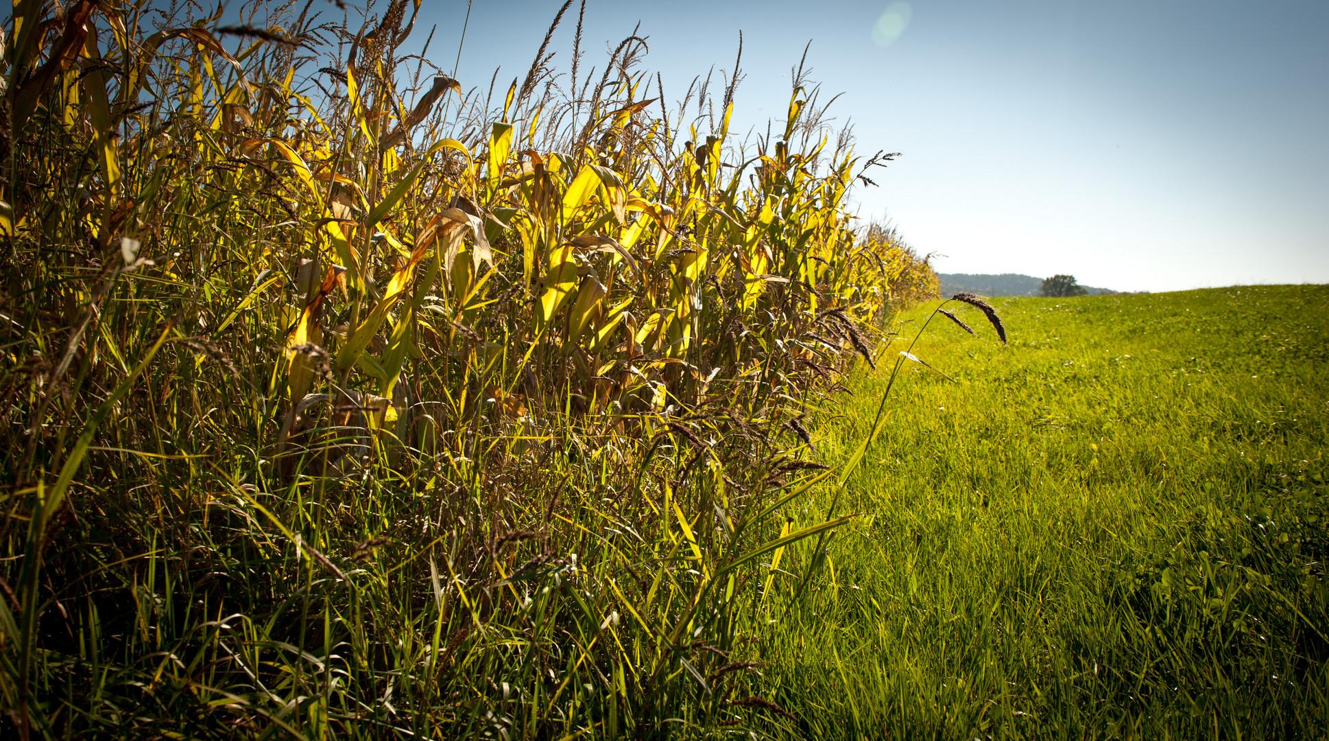 Zwischen Feldern und Wiesen