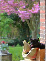 Zwischen Gartenpflege
