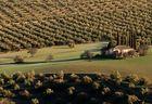Zwischen Oliven