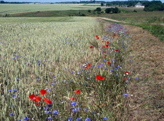 Zwischen Weg und Feld