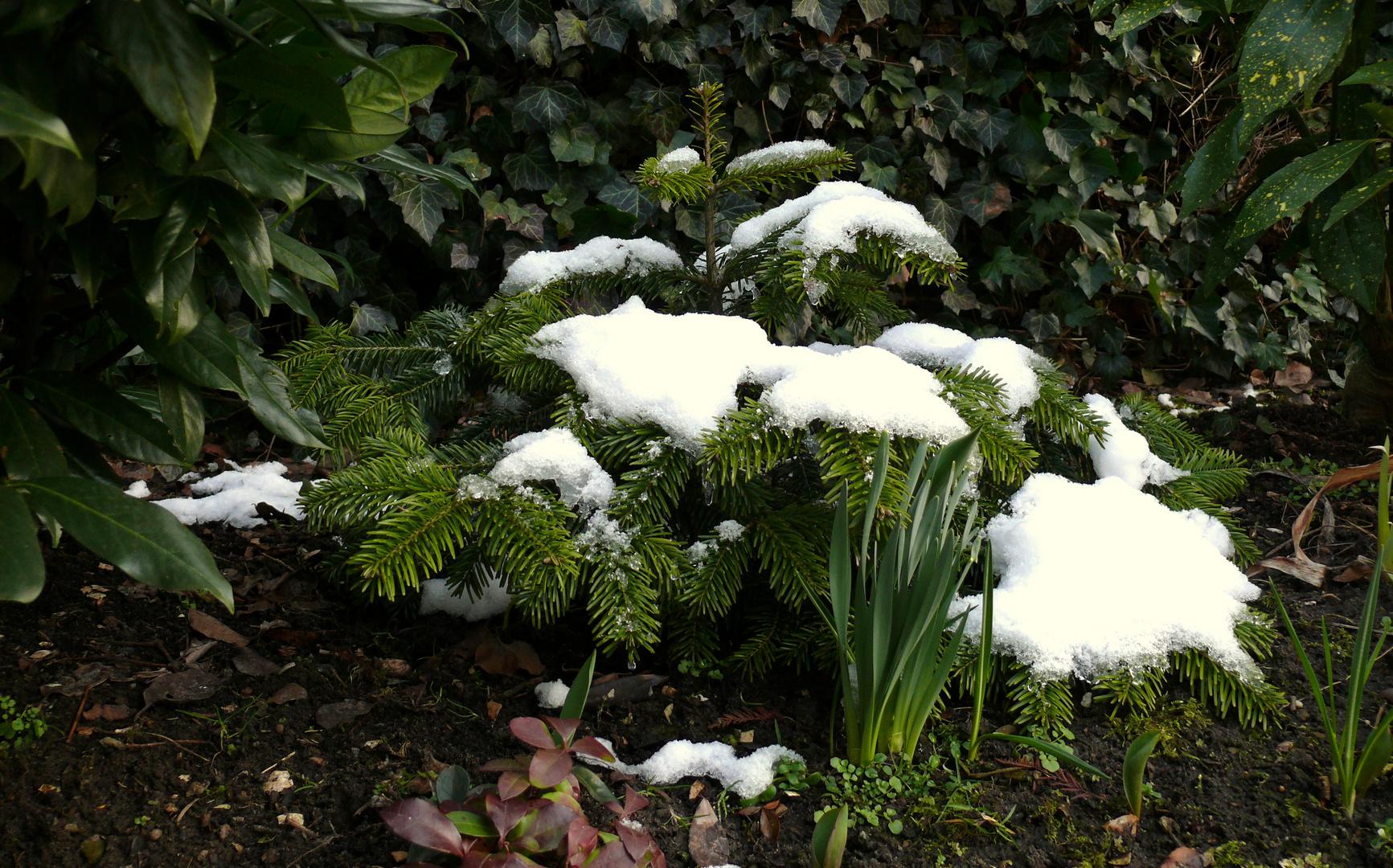 Zwischen Winter und Frühling