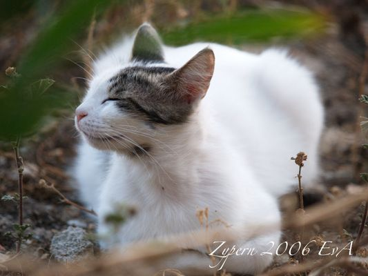 Zypern - Reich der Katzen