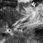 0011_(Pandemia) desinfección