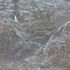 0.1 Seconds in a Life of a Dall Sheep