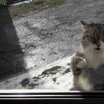 02.03.2020 Fensterln nach Katzenart