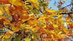 (04 Oktober) Goldener Oktober