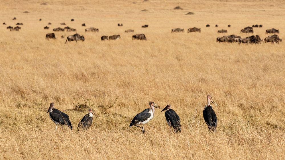 042 - 20160911 - Masai Mara - CS8A2861