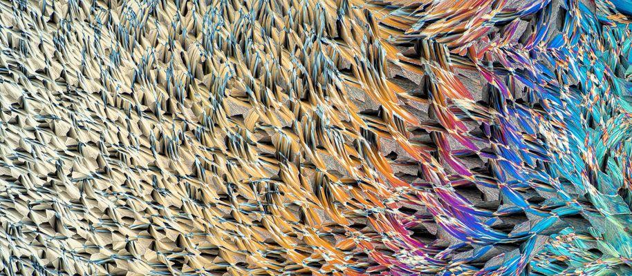 Mikroskopfotografie Bilder & Fotos