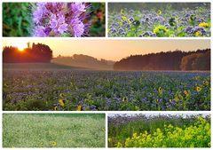 (08 November) Leuchtende Felder und Wiesen