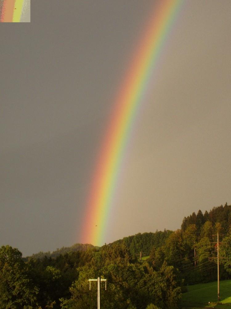 080811_20h07 Regenbogen, linker Pfeiler, Graureiher ''in gelb''_Detailfoto eingefügt