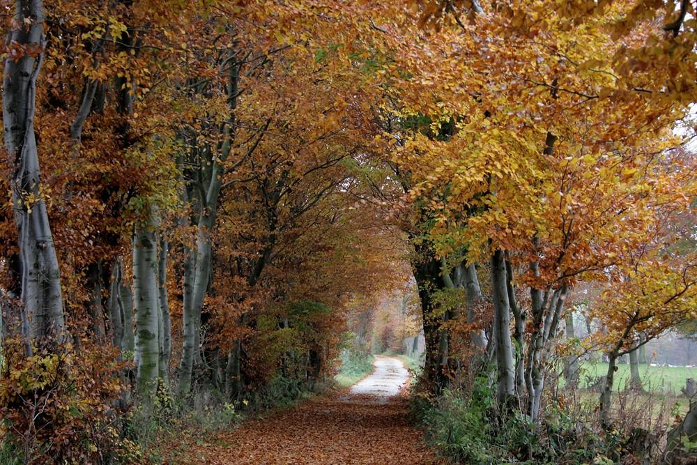 08118 Herbst im Heckenland