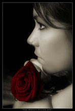 08955 - Rose's Rose