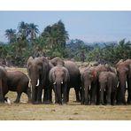 [08africa] / Die Karawane zieht weiter…