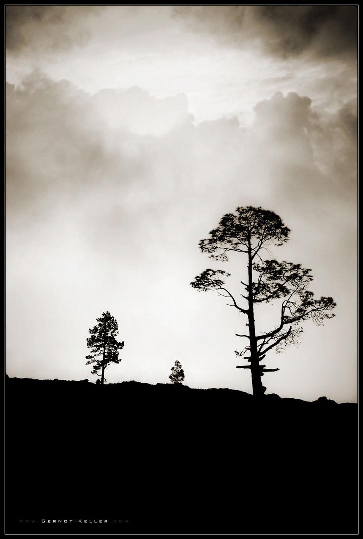 09525 - Teneriffa - Am Kraterrand