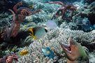 Unterwasserwelt von Foto Flip