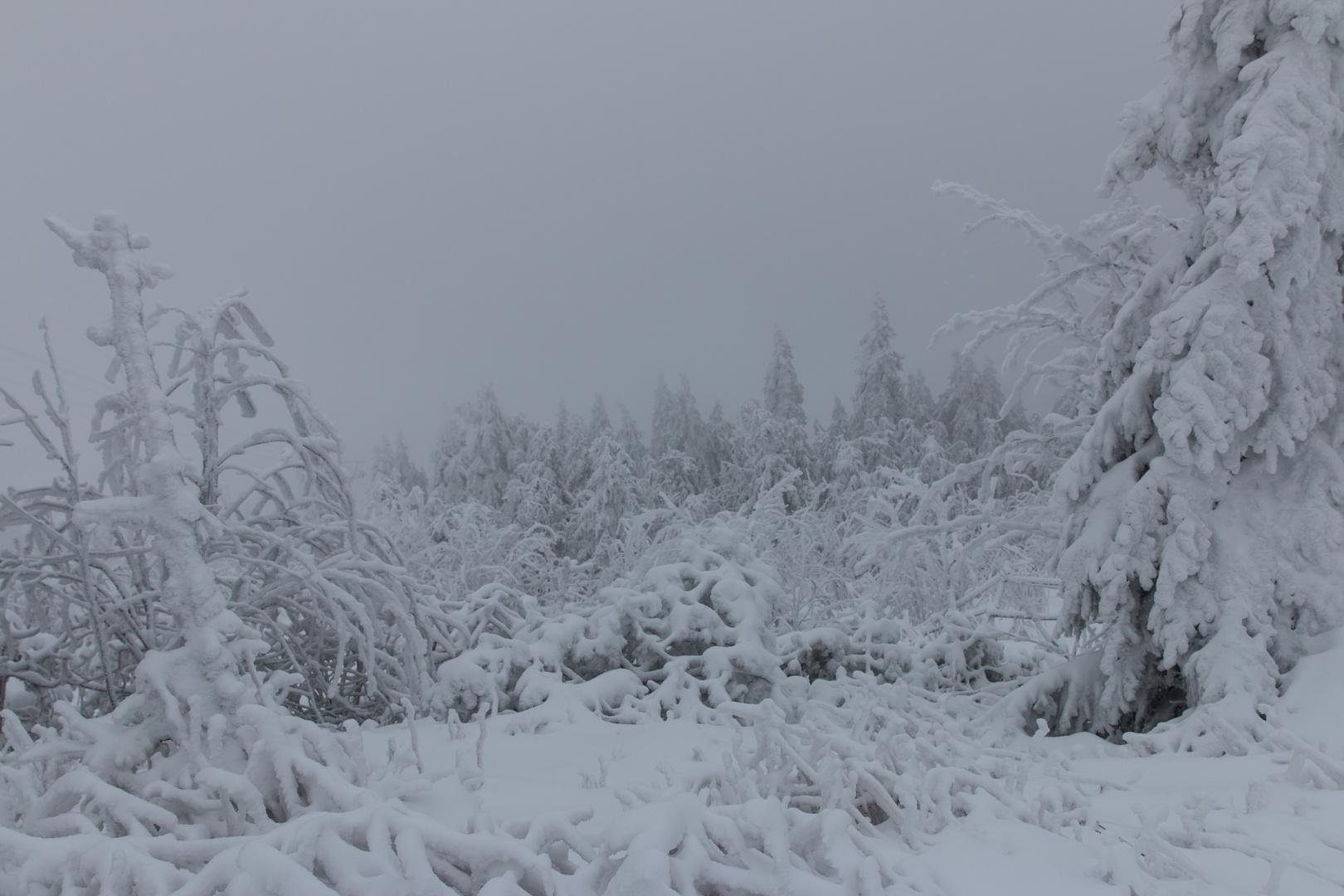 1. Advent Wald in Schnee gehüllt