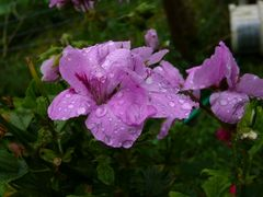 1. Bei uns regnet's ...