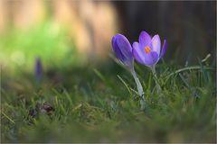 1. Frühlingsboten
