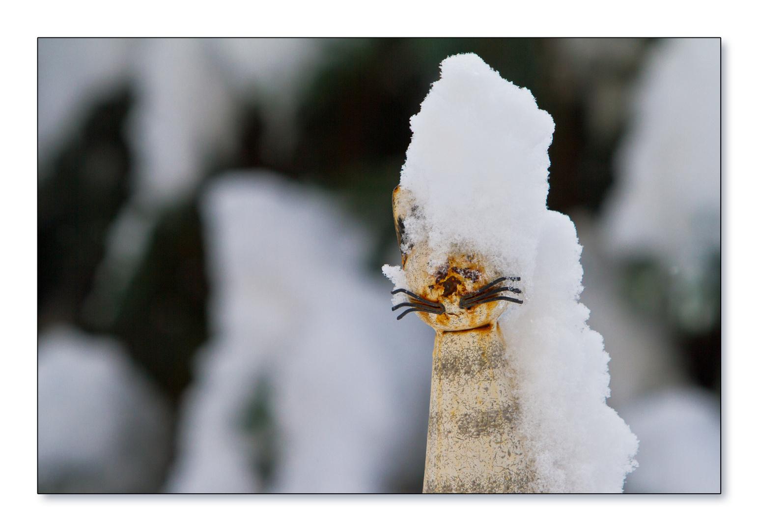 1 Mau im Schnee