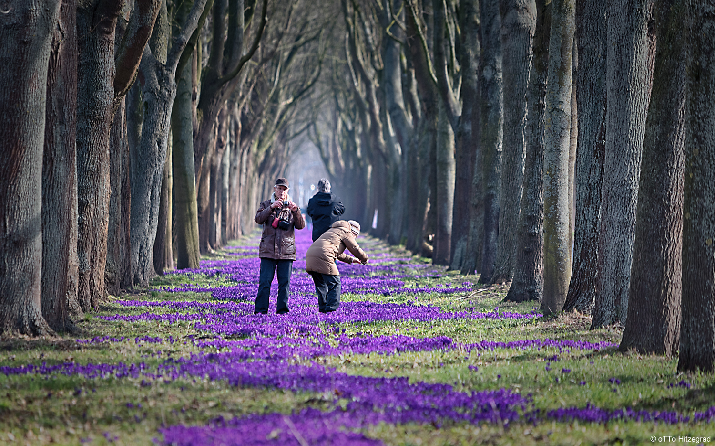 21 Million Krokusse Foto & Bild   landschaft, bäume, baum Bilder ...