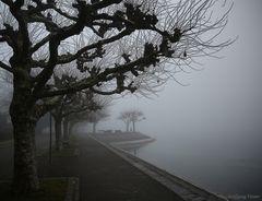 -1- Nebelstimmung in der Seestraße in Konstanz