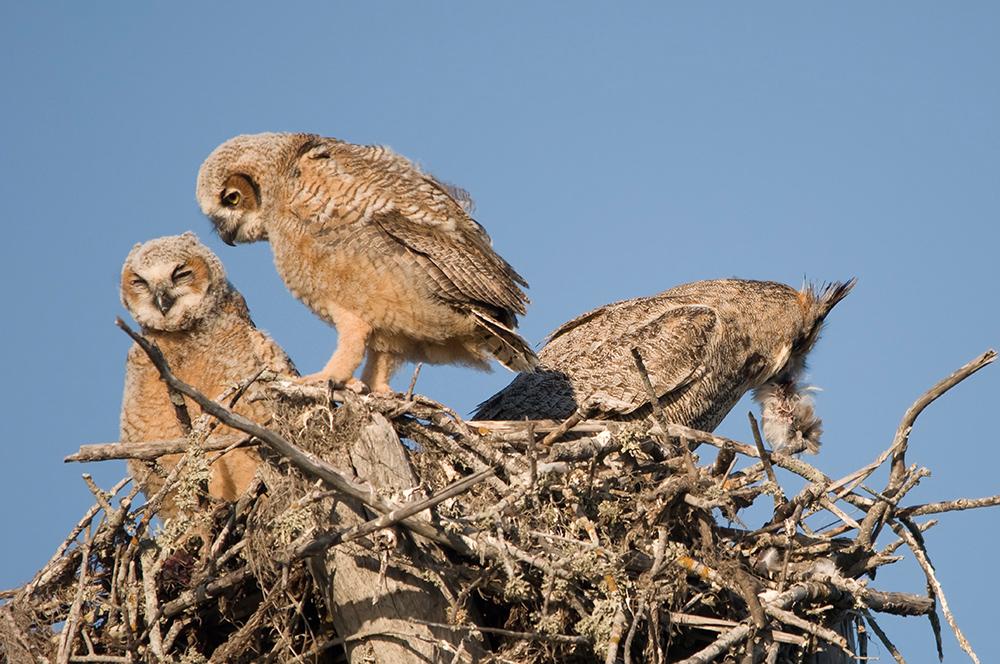 (1) Oh, Muttern säubert das Nest...
