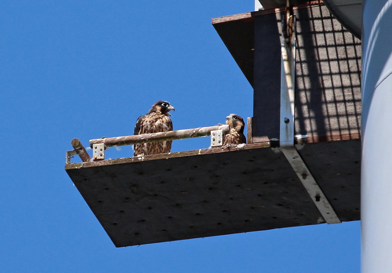 1 Zi. mit Balkon, im obersten Stock