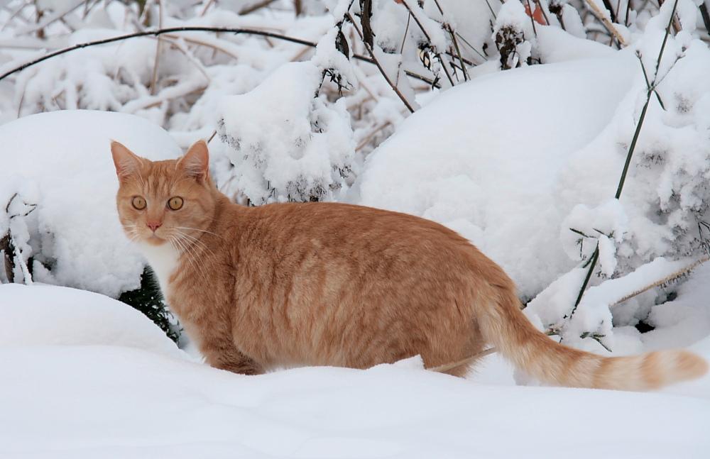 10 für weiße mäuse foto  bild  tiere haustiere katzen