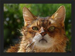 10. Weltkatzentag