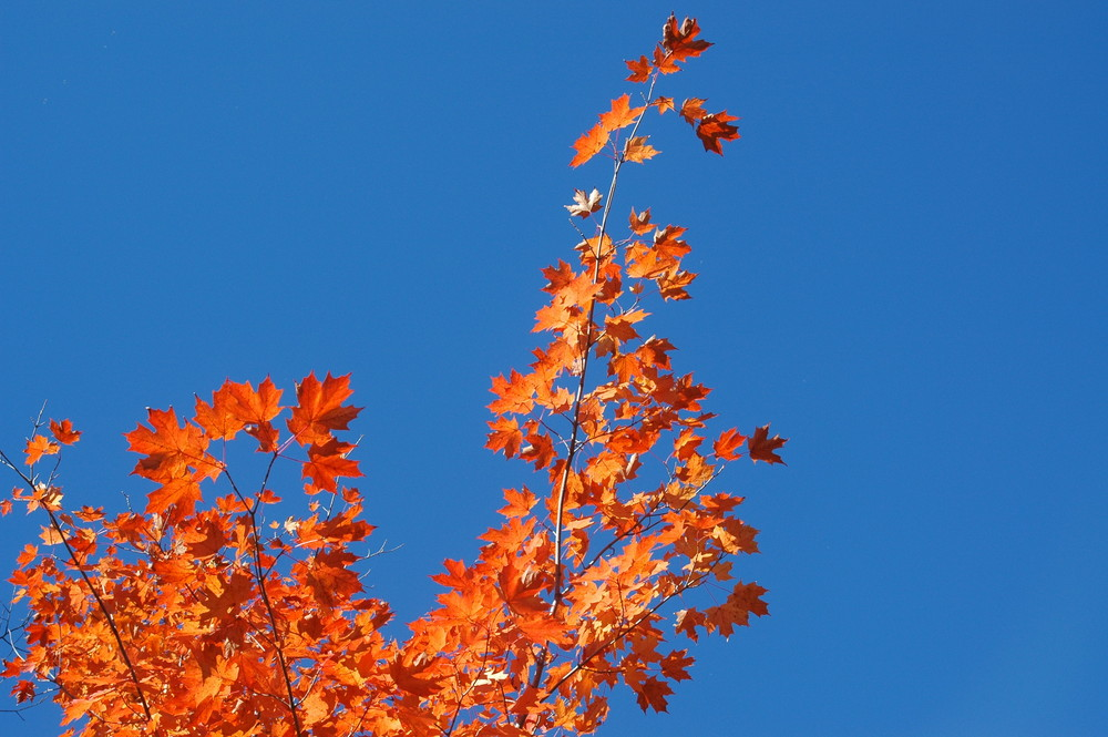 100% Canadian Fall colours