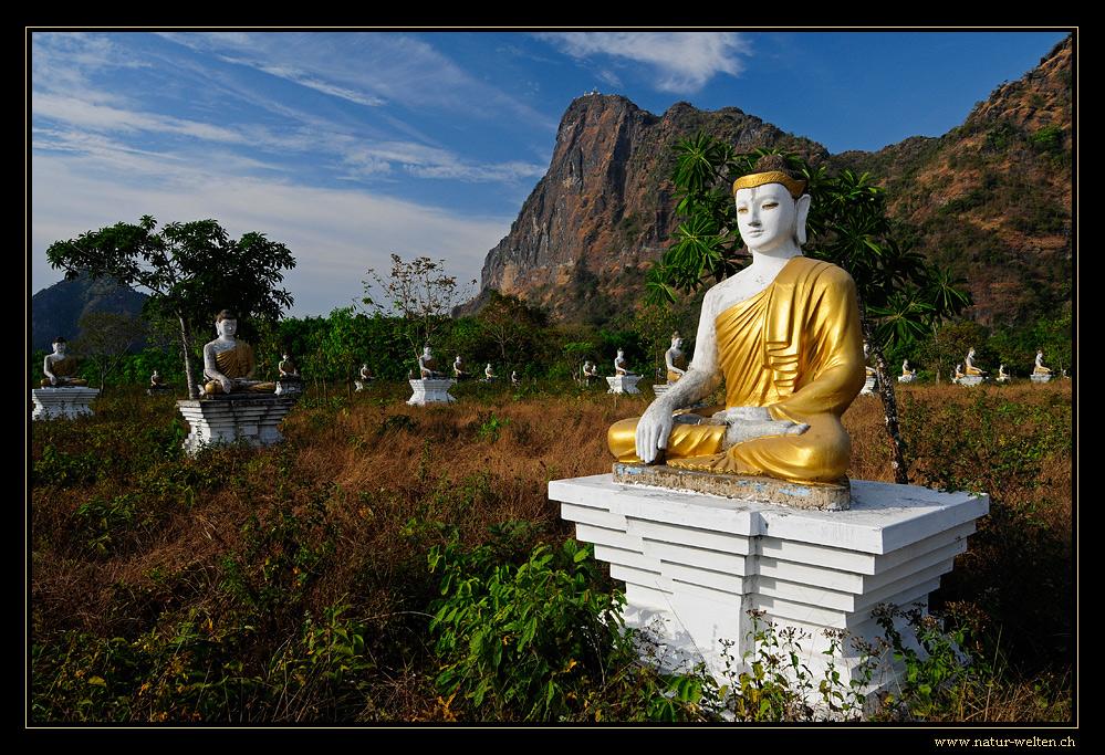 1'000 Buddha Field
