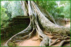 1000 Jahre alte Mauern bersten unter der Gewalt der Natur