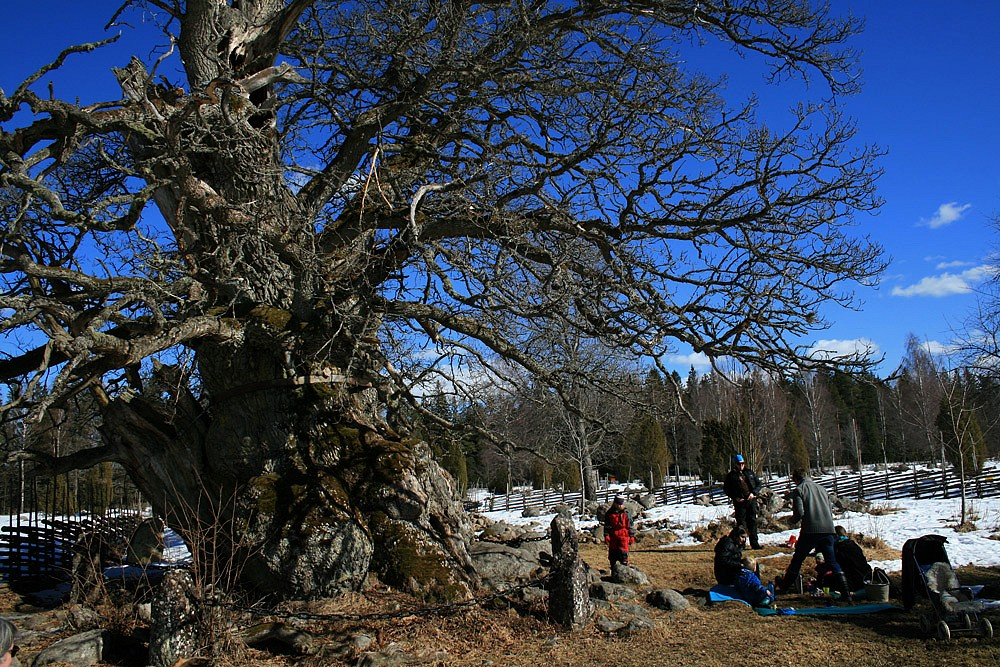 1000 Jahre Picknick