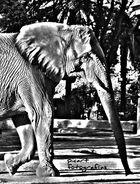 1/2 Elefante