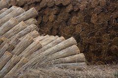 12 Roseaux de Camargue préparés pour la fabrication de toits de chaume