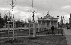 127 große Linden wurden gefällt …