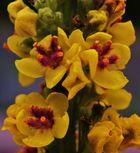 12mm-Blüten