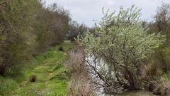 13 Ruisseau près de Méjanes