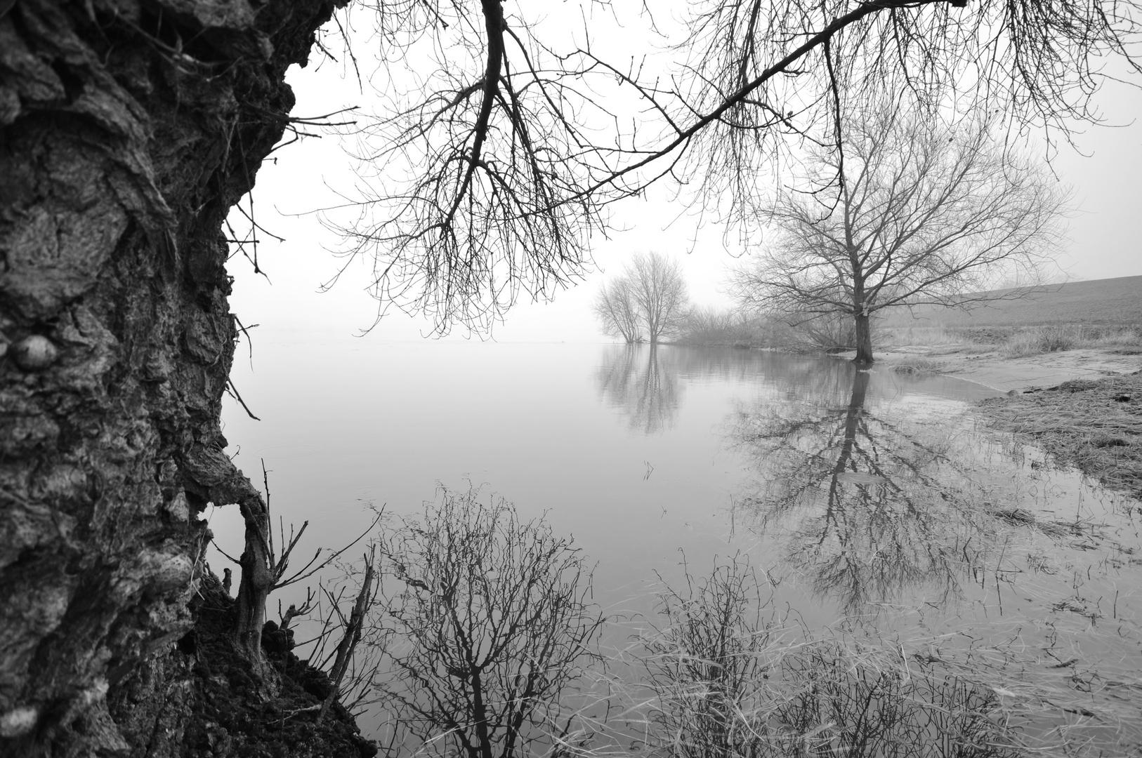 130216 - Stilles Wasser II