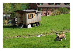 (14) Ackerbau und Viehzucht...