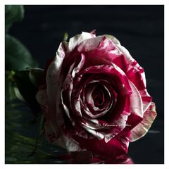 150530 Rose B R C