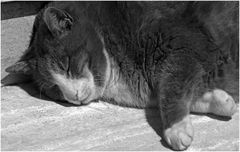 17 février  journée mondiale du chat!