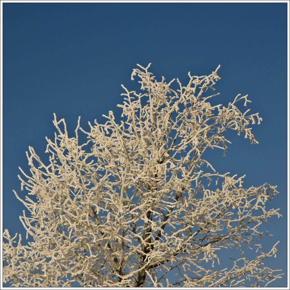 - 17°C Jan 2009 IV