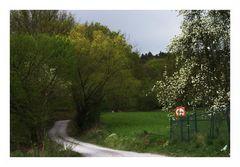 (19) Der Weg auf den Berg...