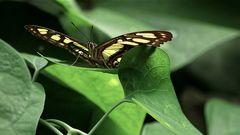 1907_1183 im Schmetterlingshaus