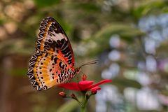 1907_1345 im Schmetterlingshaus