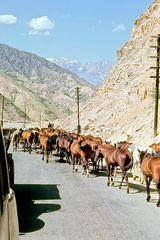 1968 Tadshikistan 8