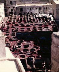 1985 in Fes